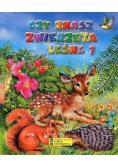 Czy znasz zwierzęta leśne? w.2013