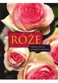 Róże Najlepsze odmiany europejskich hodowców