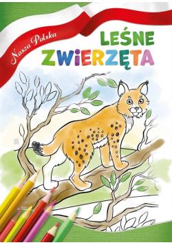 Nasza Polska. Leśne zwierzęta