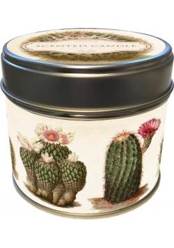 Zapachowa świeczka 79 - kaktusy - zapach pomarańcz