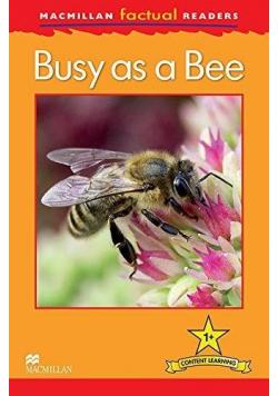 Factual: Busy as a Bee 1+