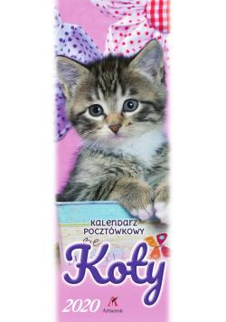 Kalendarz 2020 Pocztówkowy Koty