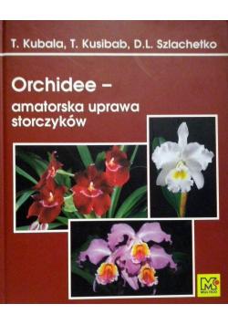 Orchidee amatorska uprawa storczyków