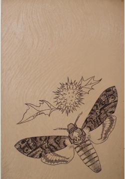 Motyle Polskie atlas