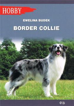 Border Collie w.2020