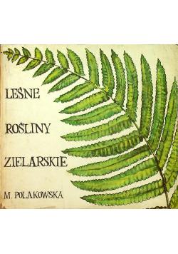 Leśne rośliny zielarskie