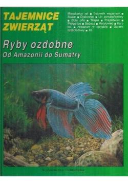 Tajemnice zwierząt Ryby ozdobne od Amazonii do Sumatry