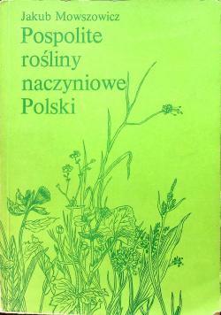 Pospolite rośliny naczyniowe Polski