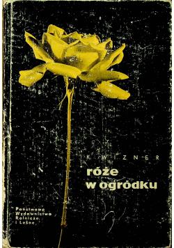 Róże w ogródku