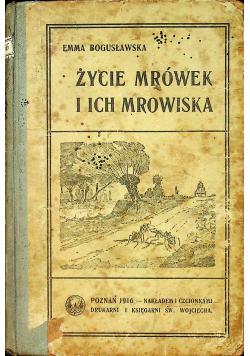 Życie mrówek i ich mrowiska 1916 r