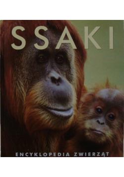 Ssaki encyklopedia zwierząt