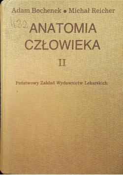Anatomia człowieka II