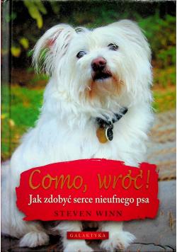 Como wróci Jak zdobyć serce nieufnego psa