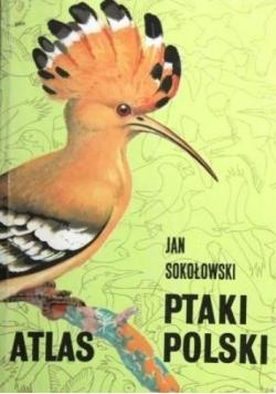 Atlas Ptaki Polski