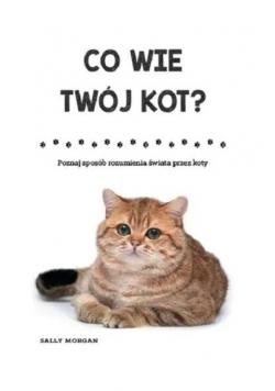 Co wie Twój kot? Poznaj sposób rozumienia świata..