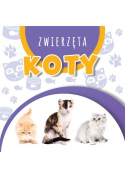 Wstęgi kartonowe. Koty