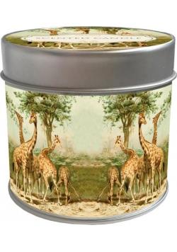 Zapachowa świeczka 118 - żyrafy - zapach pomarańcz