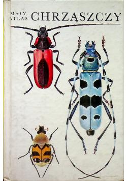 Mały atlas chrząszczy