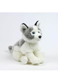 Husky 23cm WWF