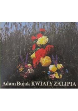 Kwiaty Zalipia
