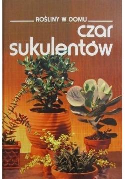 Rośliny w domu Czar sukulentów
