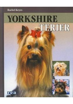 Yorkshire terier