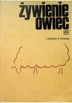 Żywienie owiec