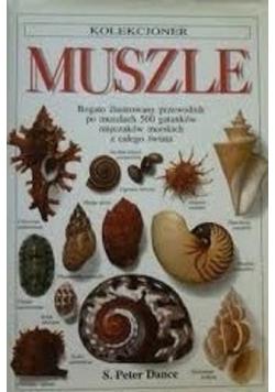Kolekcjoner muszle