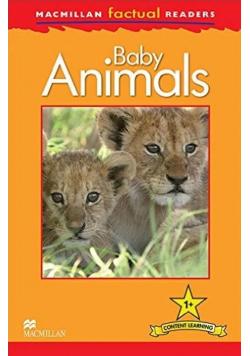 Factual: Baby Animals 1+