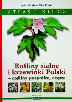 Rośliny zielne i krzewinki Polski rośliny pospolite częste Atlas i klucz