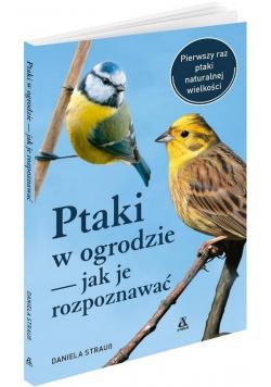 Ptaki w ogrodzie - jak je rozpoznawać w.4