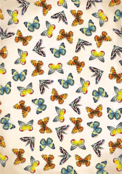 Notatnik Motyle
