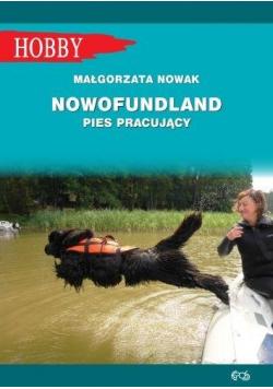 Nowofundlad - pies pracujący