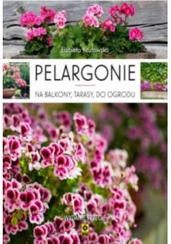 Pelargonie na balkony, tarasy i do ogrodu