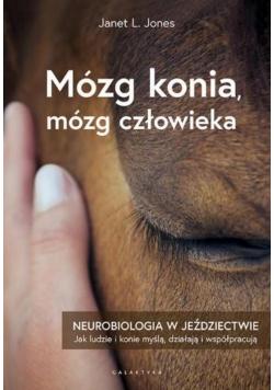 Mózg konia, mózg człowieka