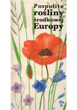 Pospolite rośliny środkowej Europy
